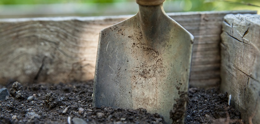 Moestuinbak of volle grond?