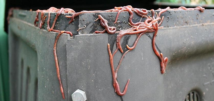 Hoe maak je wormencompost