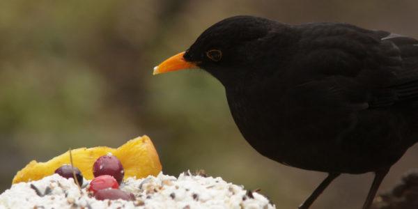 vogeltaarten maken
